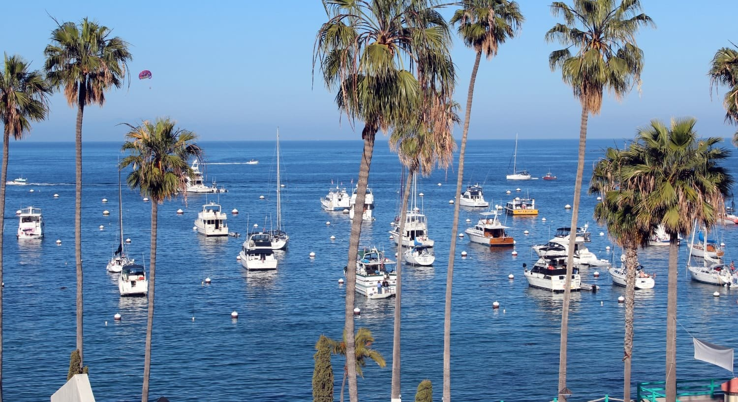 View of ocean marina filled with boats and palm trees along the shore